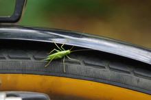 Grasshopper On A Bicycle Wheel