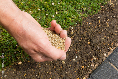 Gardener with a hand full of lawn seed