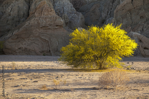 Foto op Canvas Honing Box Canyon Road, about 30 minutes from Joshua Tree, CA.