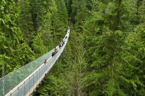 Cuadros en Lienzo  Capilano bridge