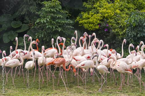 Foto op Aluminium Flamingo Flamingo birds standing in lake