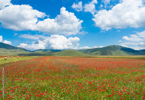 Foto op Canvas Klaprozen Castelluccio di Norcia, 2018 (Umbria, Italy) - The famous landscape flowering with many colors, in the highland of Sibillini Mountains, central Italy