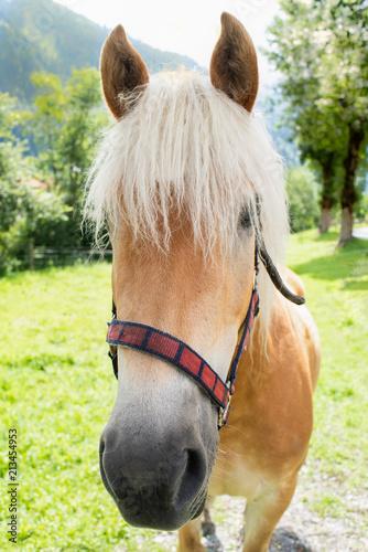 Photo  Horse portrait