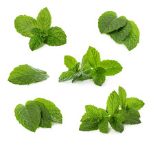 Set Of Fresh Mint Leaves Isolated On White