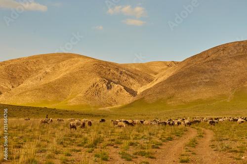 Foto op Plexiglas Donkergrijs Livestock in Zagros mountains Iran