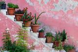 Rośliny doniczkowe i kwiaty na schodach - 213472956