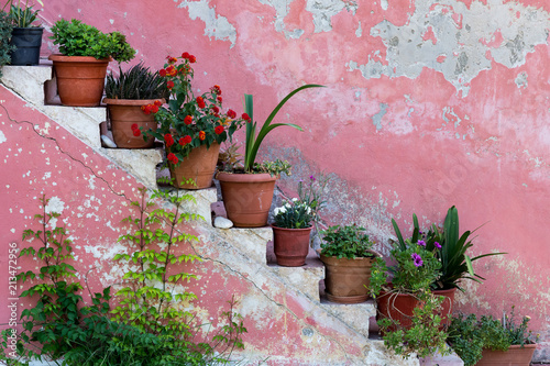 Foto op Canvas Trappen Pot plants and flowers on the stairs