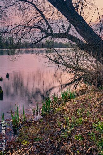 Fotobehang Grijze traf. Spring landscape