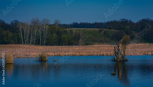Foto op Aluminium Cappuccino Spring landscape