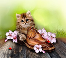 Kitten In Shoe