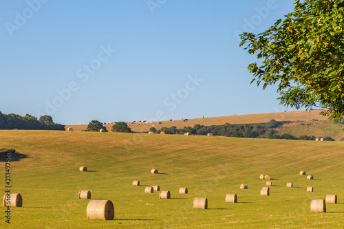 Foto op Canvas Honing Hay bales in the Sussex countryside, on a sunny summer's morning