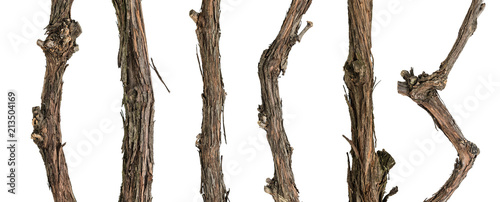 Fotografija  Collection dry branches of the vine isolated on white, including clipping path