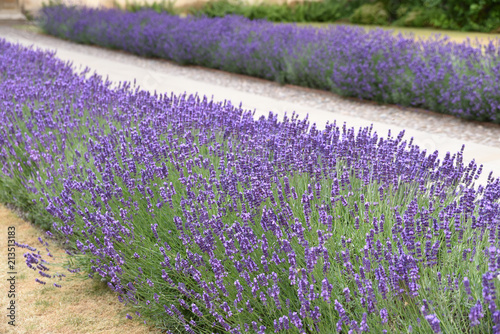 Spoed Foto op Canvas Lavendel Lavande bleue