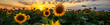 Leinwandbild Motiv Summer landscape: beauty sunset over sunflowers field. Panoramic views