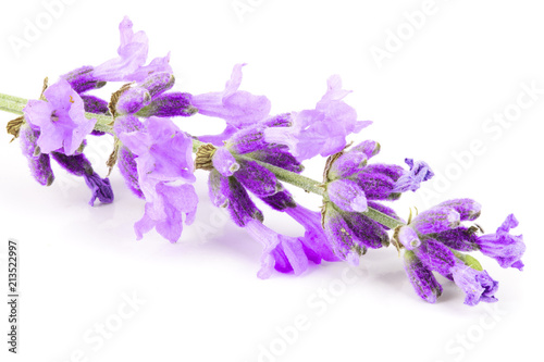 Photo  Twig of lavender isolated on a white background