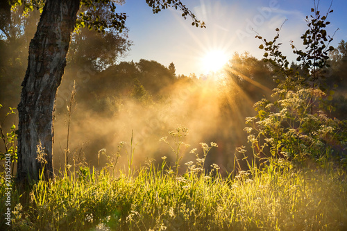 landscape with sun and forest and meadow at sunrise - 213527503