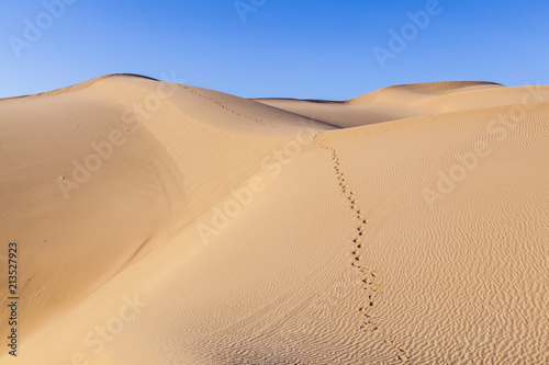 Foto op Aluminium Zandwoestijn sand dune in sunrise in the sonoran desert with human footsteps in the sand