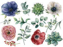 Watercolor Eucalyptus, Succulent And Ranunculus Floral Set. Hand Painted Blue, Red And White Anemone, Berry, Eucalyptus Leaves Isolated On White Background. Illustration For Design, Print.