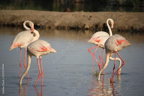 Foto op Aluminium Flamingo camargue flamants roses parc ornithologique