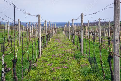 Fields in Sidleny Wine Cellars near small town Milotice, Czech Republic Poster