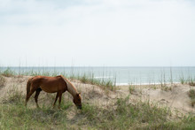 Wild Horse At The Beach