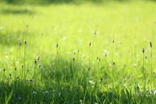 Sunlit Grass Summer Background