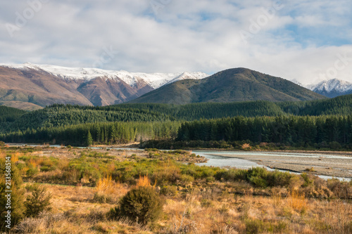 Foto op Canvas Oceanië pine tree forest at Wairau river in winter, South Island, New Zealand