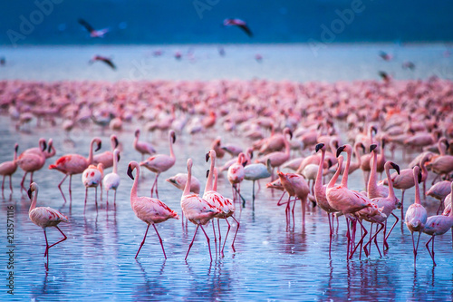 Photo Stands Flamingo Africa. Kenya. Lake Nakuru. Flamingo. Flock of flamingos. The nature of Kenya. Birds of Africa.