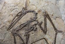 Dinosaur Fossil In Rock