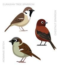 Bird Sparrow Set Cartoon Vector Illustration