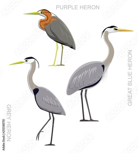 Fotomural Bird Heron Set Cartoon Vector Illustration