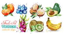Watercolor Fruits Set Collecti...