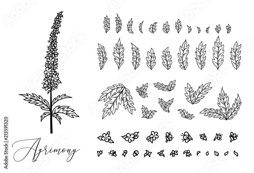 Agrimonia Eupatoria. Canvas Print