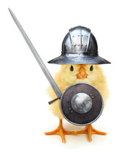 Crazy Yellow Chick Medieval Knight With Helmet Shield And Sword Funny Baby Animal Poster