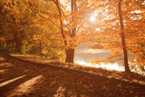 Sun shines through yellow leaves of trees on the path around the lake in city park, beautiful fall season landscape