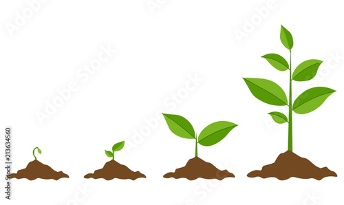 Phases plant growing. Planting tree infographic. Evolution concept. Sprout, plant, tree growing agriculture icons. Vector illustration in flat style