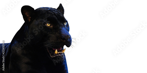 Photo Stands Panther Panther with on a white background space for font