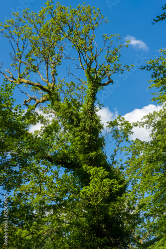 Foto op Aluminium Bomen Woodland Trees