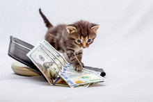 A Little Kitten Near A Purse With Dollars. Business Profit Counting