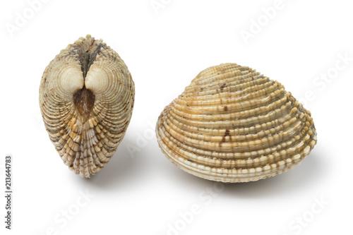 Vászonkép Fresh raw warty venus clams