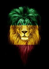 Portrait Of A Beautiful Lion, ...