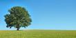 canvas print picture - Freistehender Baum auf weiter Wiese vor blauem Himmel