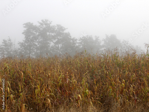 Foto op Aluminium Wit Autumn landscape with trees in the fog.