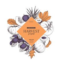 Hand Drawn Banner Of Autumn Harvest Fruits, Vegetables. Vector Vintage Engraved Style. Pumpkin, Plum, Oak, Mapple, Chestnut Leaves. Fall Holiday Flyer. Thanksgiving, Farm Festival, Food Market.