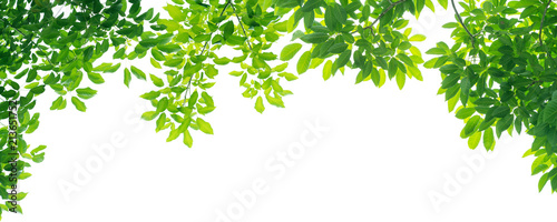 panoramic Green leaves on white background Tablou Canvas