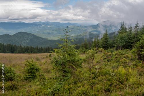 Poster Donkergrijs Coniferous forest in Carpathians