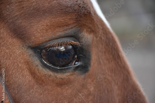 Canvas Prints Horses Photo