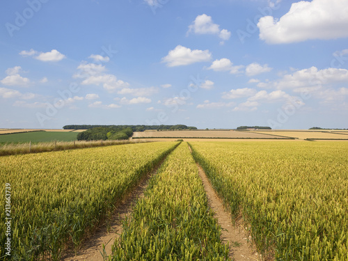 Foto op Canvas Honing tyre tracks in wheat