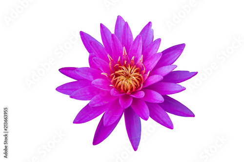 Deurstickers Waterlelies Beautiful pink water lily flower with Yellow Pollen on isolate background .