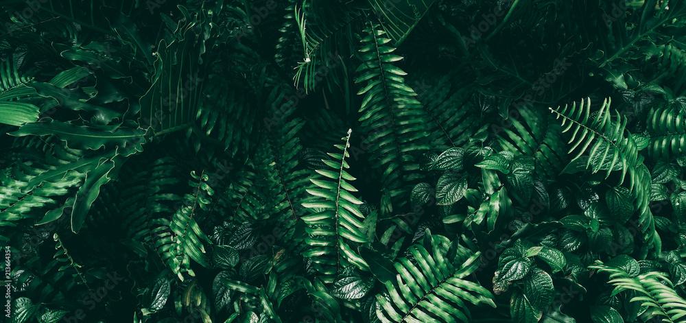 Fototapety, obrazy: Tropical green leaf in dark tone.